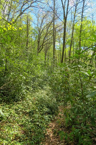 Bradley Creek Trail -- 2,520'