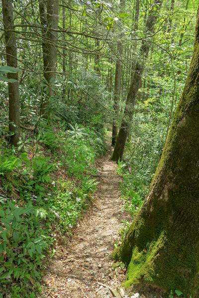 Bradley Creek Trail -- 2,720'