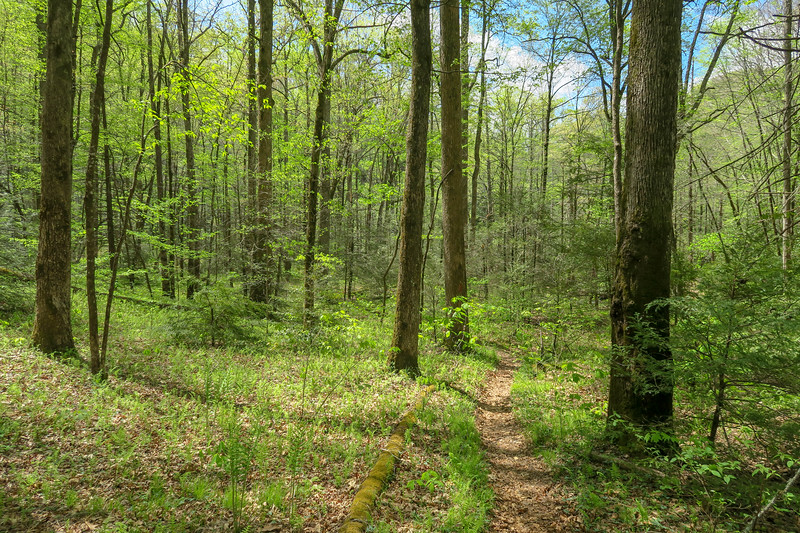 Bradley Creek Trail -- 2,620'
