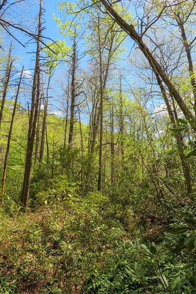 Bradley Creek Trail -- 2,480'