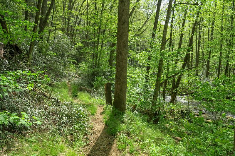 Bradley Creek Trail -- 2,680'