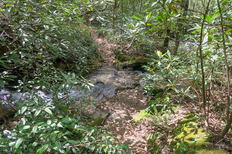 Bradley Creek Trail @ Yellow Gap Creek -- 2,660'