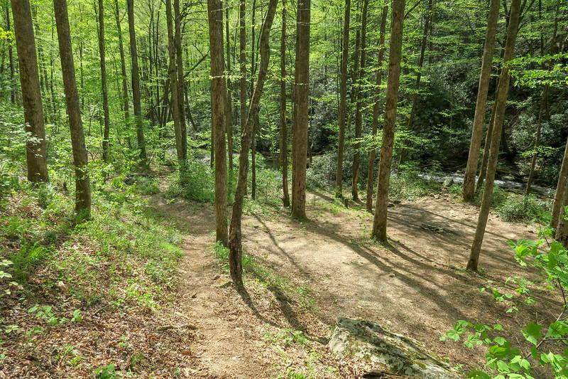Bradley Creek Trail -- 2,690'