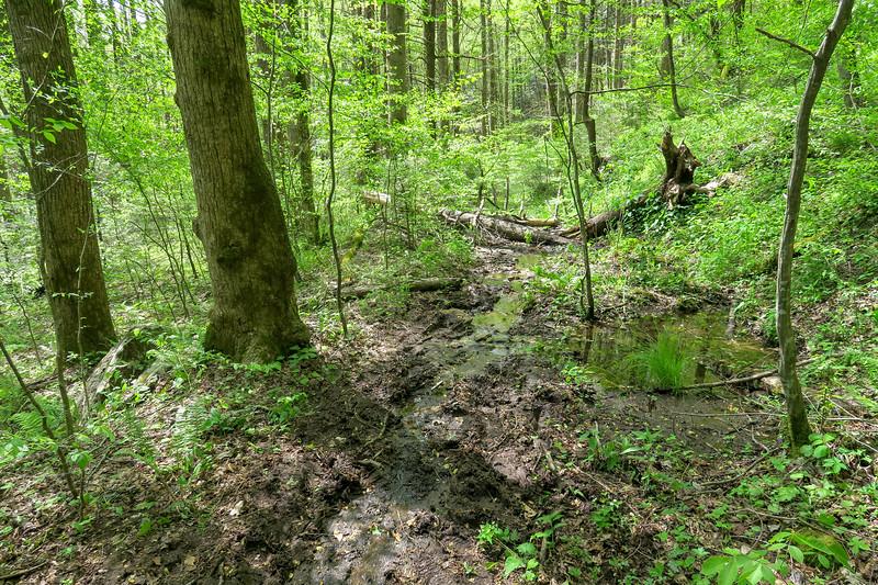 Bradley Creek Trail -- 2,600'