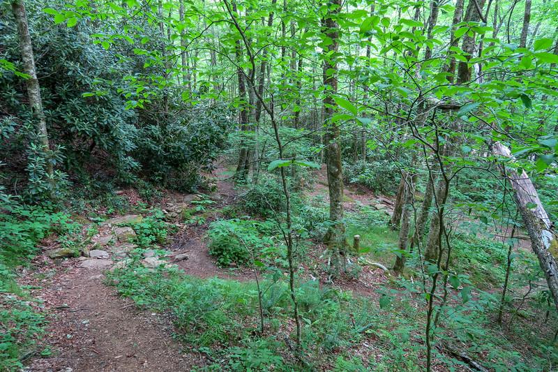 Bridges Camp Gap Trail -- 4,200'