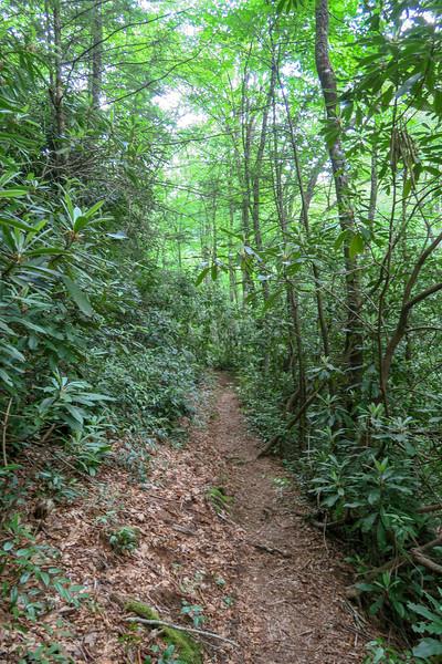 Bridges Camp Gap Trail -- 4,160'