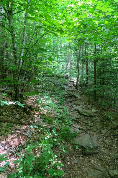 Bridges Camp Gap Trail -- 4,380'