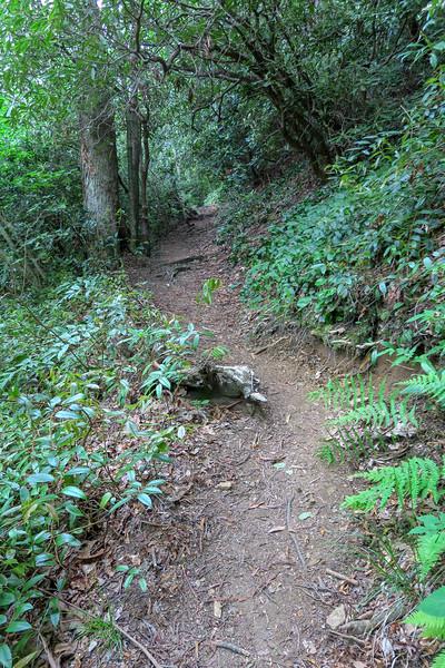 Bridges Camp Gap Trail -- 4,220'