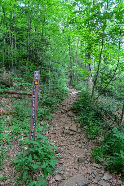 Bridges Camp Gap Trail @ Shining Rock Wilderness Boundary -- 4,060'