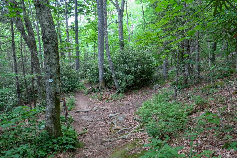 Bridges Camp Gap/Mountains-to-Sea Trail Junction -- 4,420'