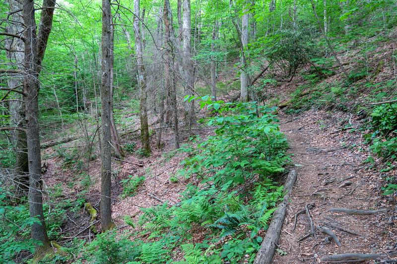 Bridges Camp Gap Trail -- 4,280'