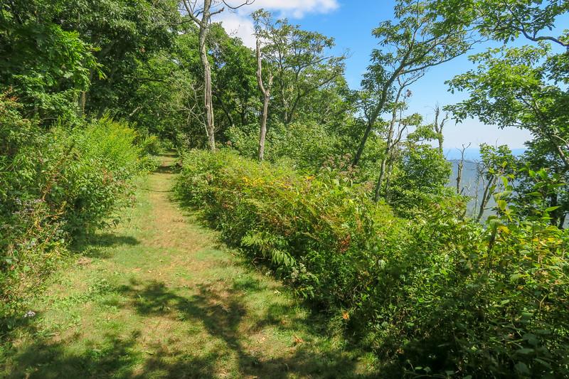 Buck Spring/Mountains-to-Sea Trail -- 4,940'