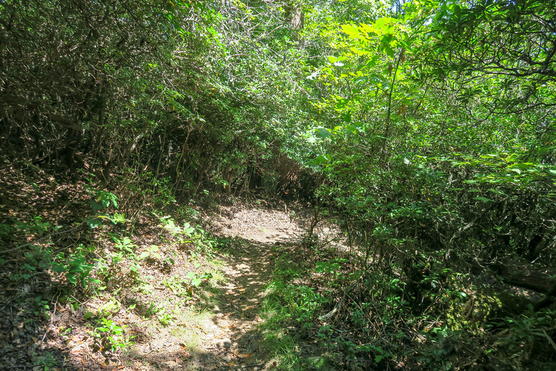 Buck Spring/Mountains-to-Sea Trail -- 4,570'