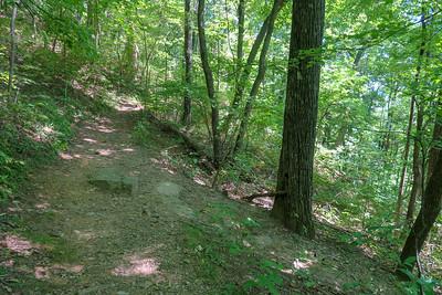 Buck Spring/Mountains-to-Sea/Barnett Branch Trail Junction -- 3,800'