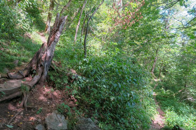 Buck Spring/Mountains-to-Sea Trail -- 4,800'