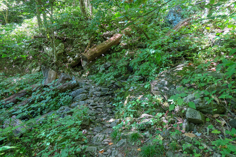 Buck Spring/Mountains-to-Sea Trail -- 4,230'