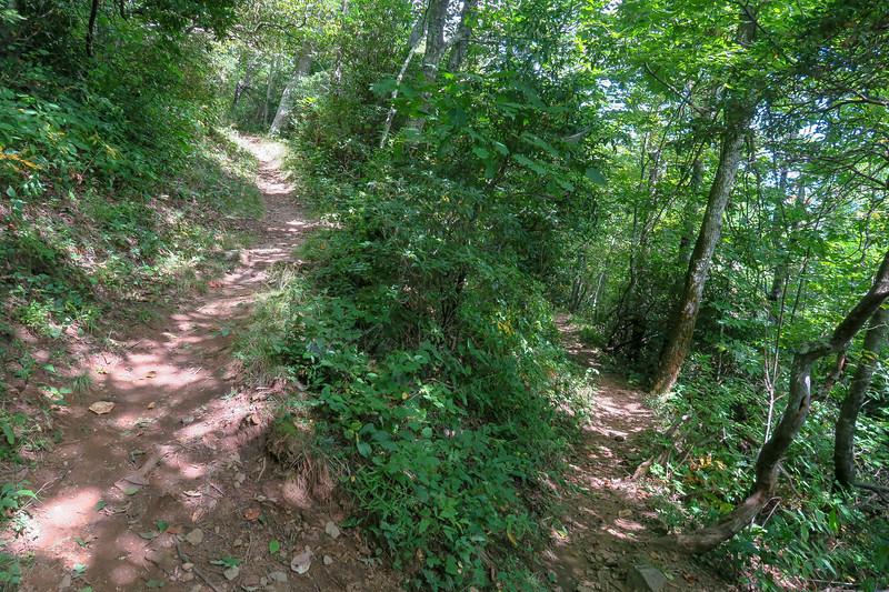 Buck Spring/Mountains-to-Sea Trail -- 4,900'
