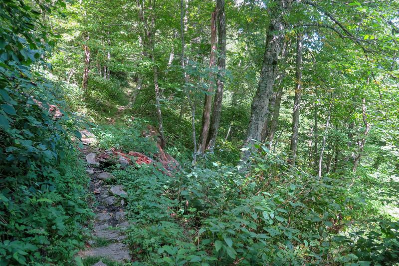 Buck Spring/Mountains-to-Sea Trail -- 4,720'