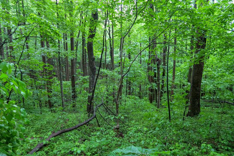 Buck Spring Trail -- 3,650'