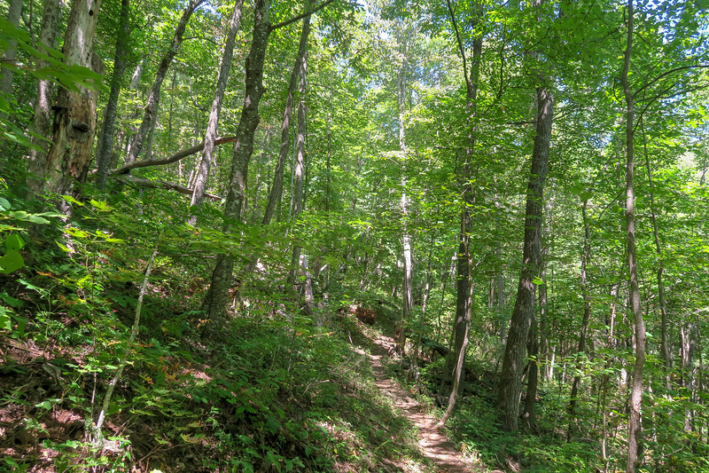 Buck Spring/Mountains-to-Sea Trail -- 4,240'