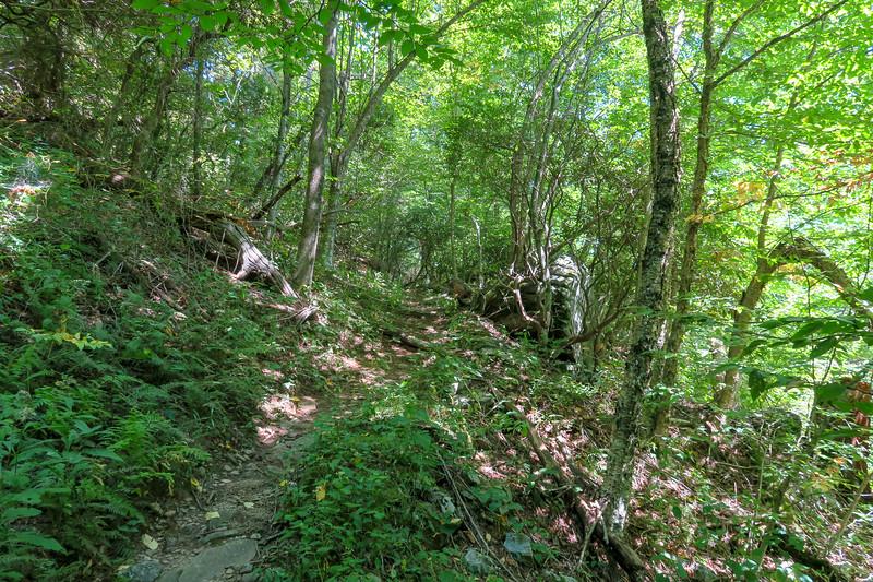 Buck Spring/Mountains-to-Sea Trail -- 4,520'