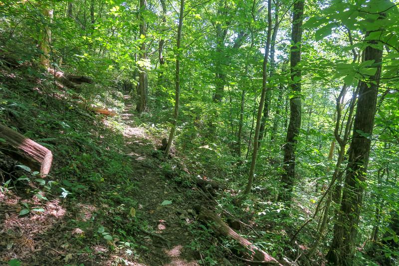 Buck Spring/Mountains-to-Sea Trail -- 4,180'