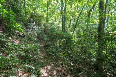 Buck Spring/Mountains-to-Sea Trail -- 3,790'