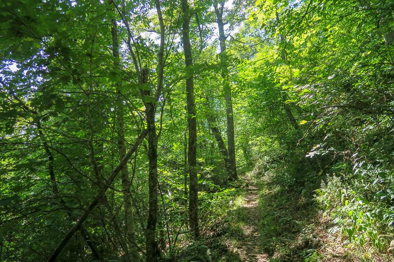 Buck Spring/Mountains-to-Sea Trail -- 4,640'