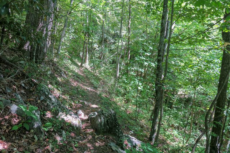 Buck Spring/Mountains-to-Sea Trail -- 4,100'