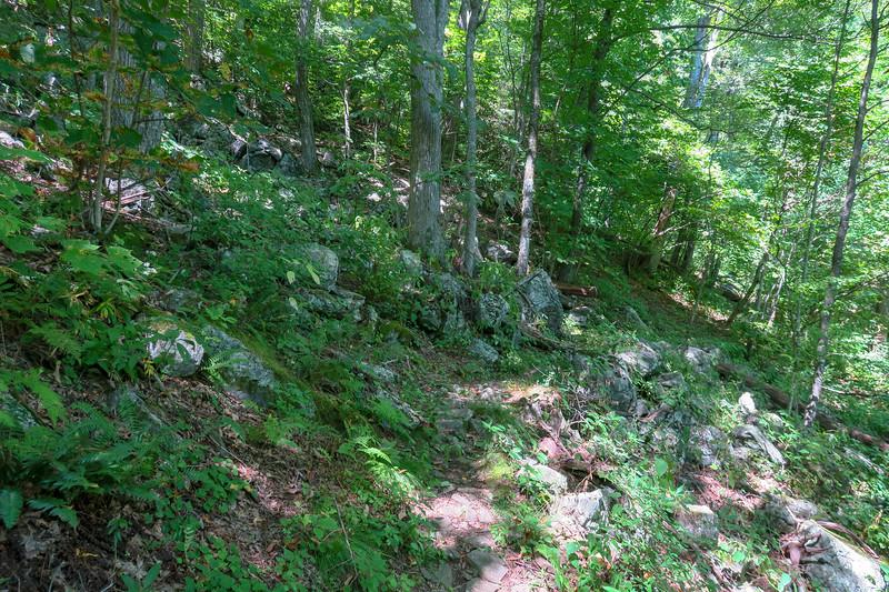 Buck Spring/Mountains-to-Sea Trail -- 4,080'