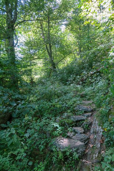 Buck Spring/Mountains-to-Sea Trail -- 4,680'