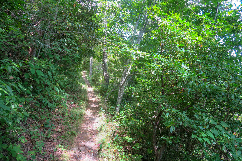 Buck Spring/Mountains-to-Sea Trail -- 4,920'