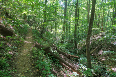 Buck Spring/Mountains-to-Sea Trail -- 3,780'