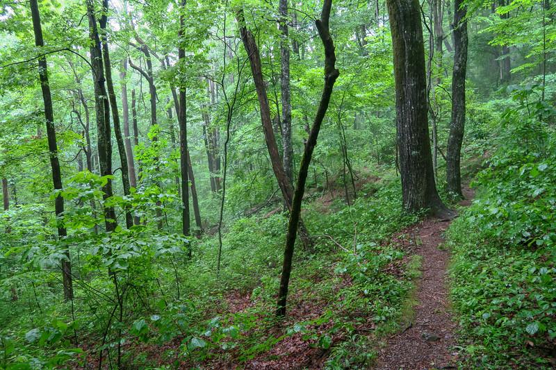 Buck Spring Trail -- 3,730'