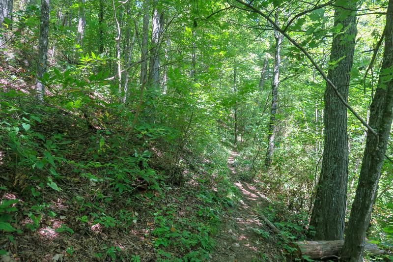 Buck Spring/Mountains-to-Sea Trail -- 4,200'