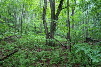 Buck Spring Trail -- 3,760'