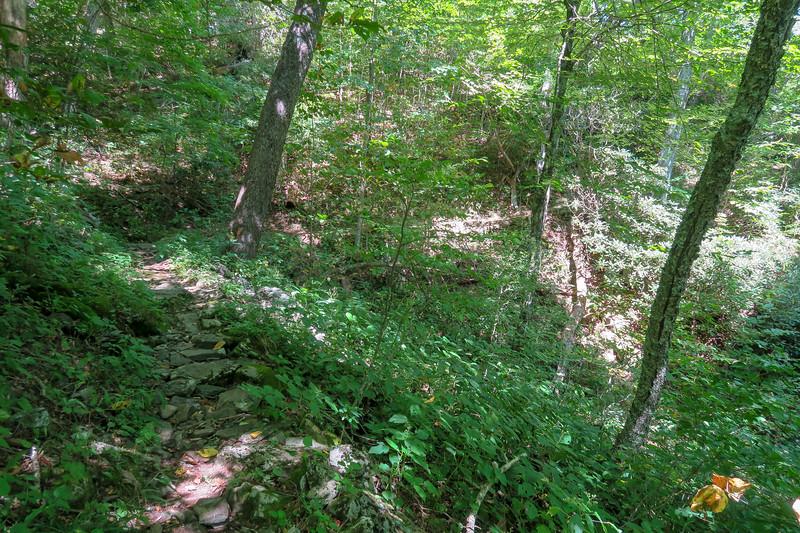 Buck Spring/Mountains-to-Sea Trail -- 4,480'