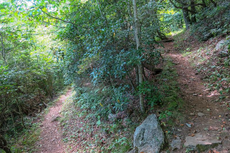 Buck Spring/Mountains-to-Sea Trail -- 4,840'