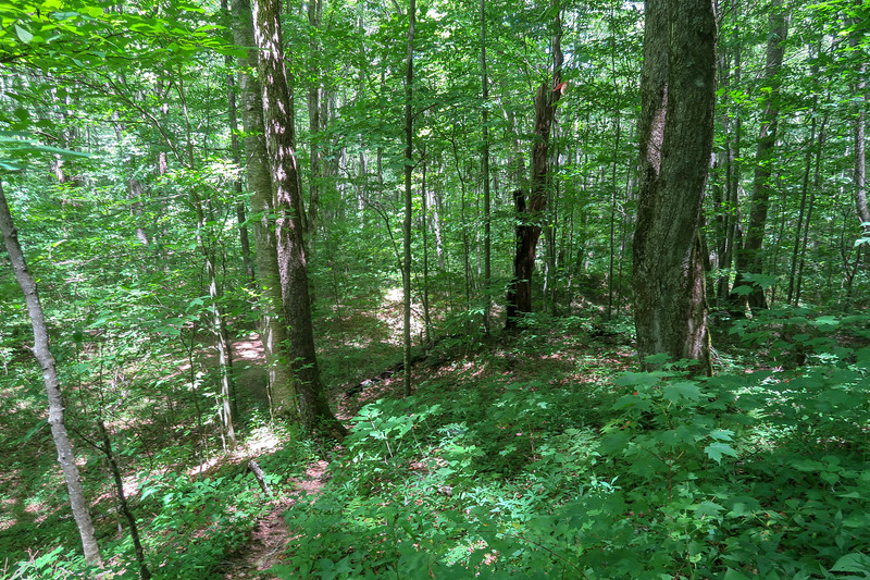 Buckeye Gap Trail -- 4,050'
