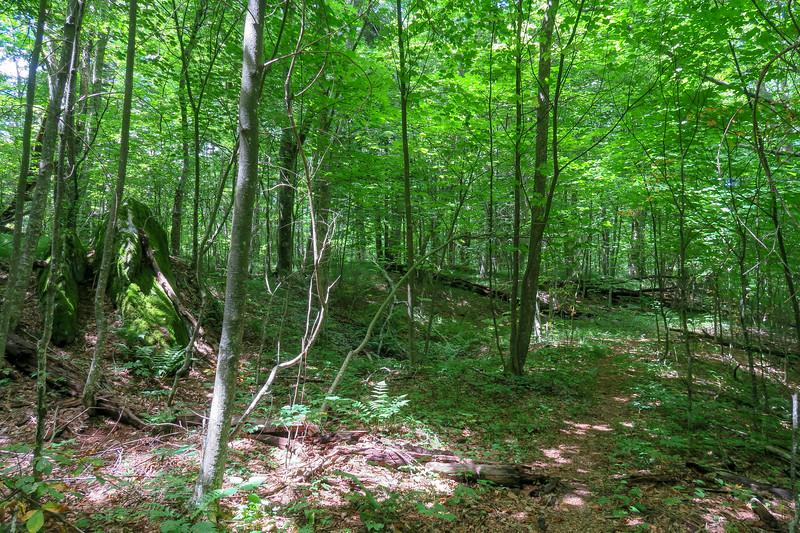 Buckeye Gap Trail -- 4,960'