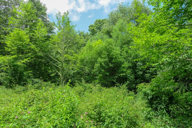 Buckeye Gap Trail -- 5,000'