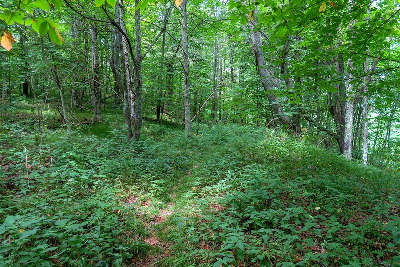Buckeye Gap Trail -- 4,980'