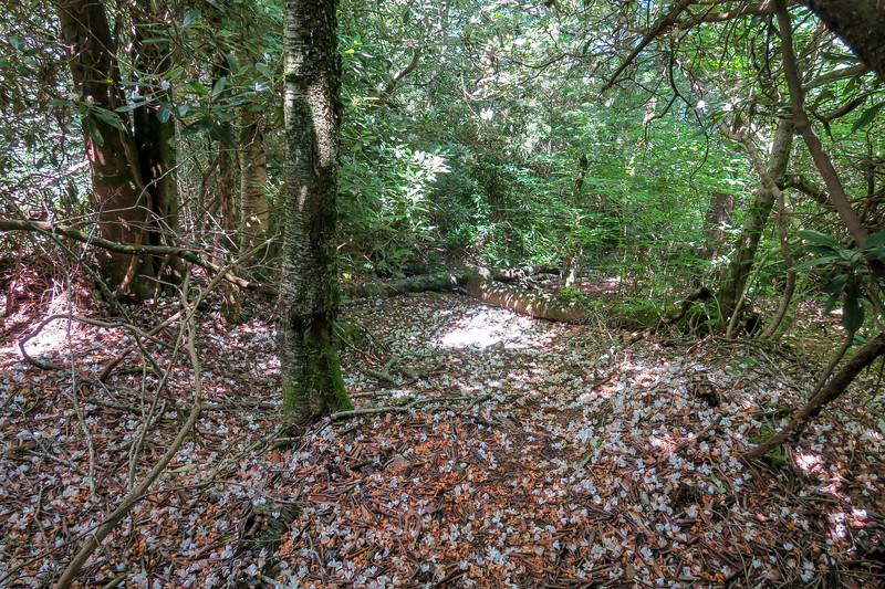 Buckeye Gap Trail -- 5,200'
