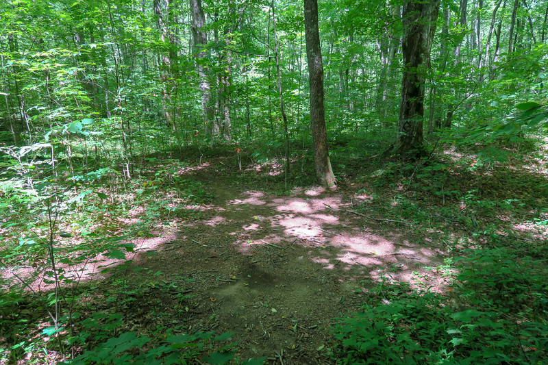 Buckeye Gap/Haywood Gap Trail Junction -- 4,020'