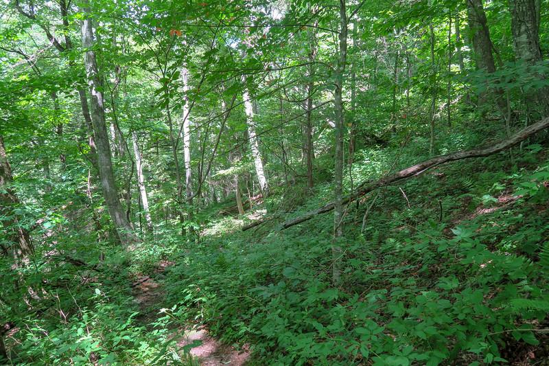 Buckeye Gap Trail -- 4,380'