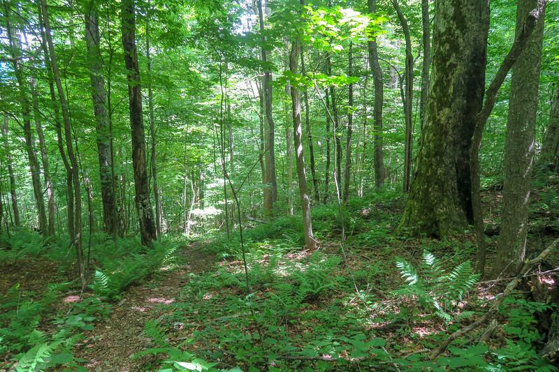 Buckeye Gap Trail -- 4,780'