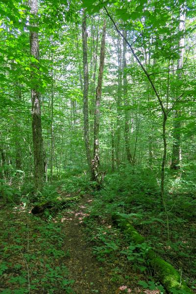 Buckeye Gap Trail -- 4,600'