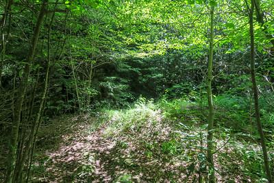 Buckeye Gap Trail -- 5,280'