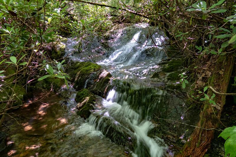 Buckeye Gap Trail @ Grassy Ridge Branch -- 4,550'