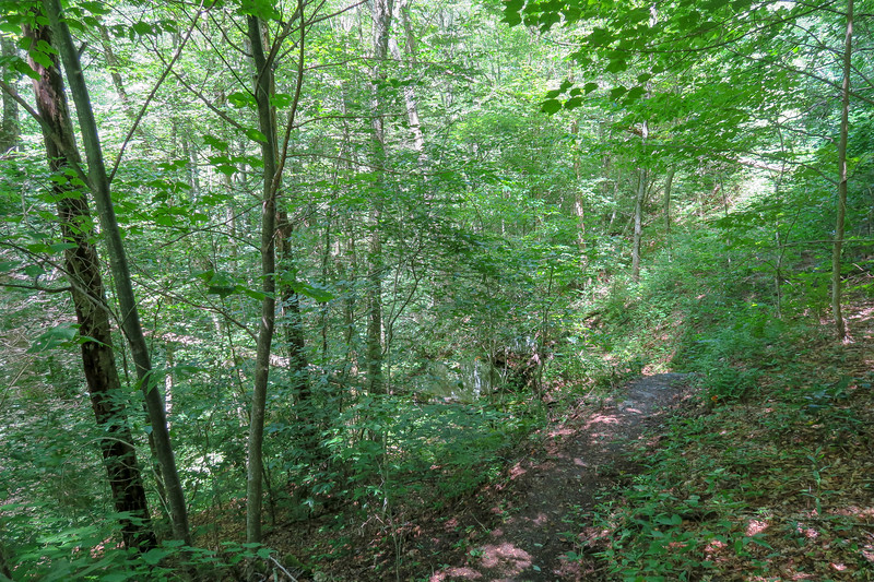Buckeye Gap Trail -- 4,500'